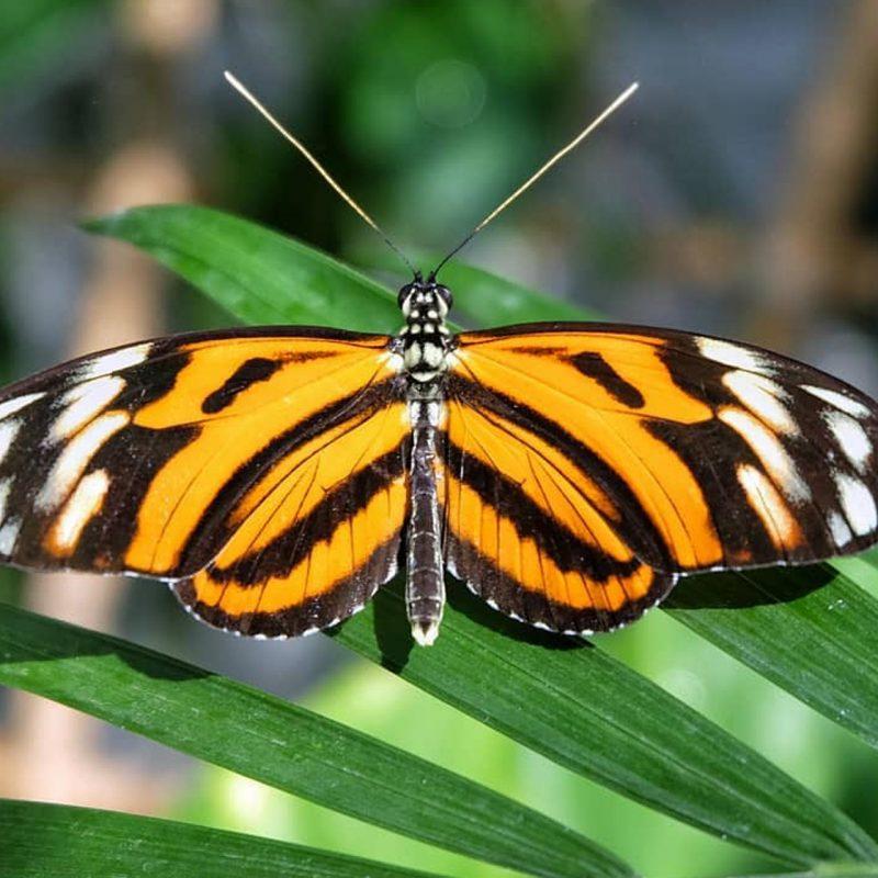 kelebekler-vadisinde-kelebek